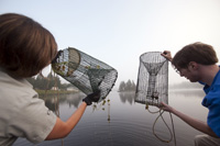 Photo of two people checking eel live-traps
