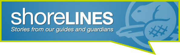 shoreLINES: Stories from our guides and guardians