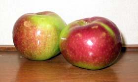 Les pommes McIntosh