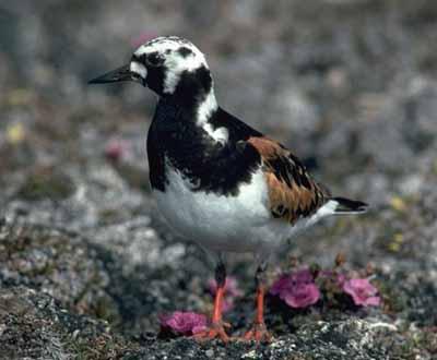 Parks Canada - Last Mountain Lake Bird Sanctuary National