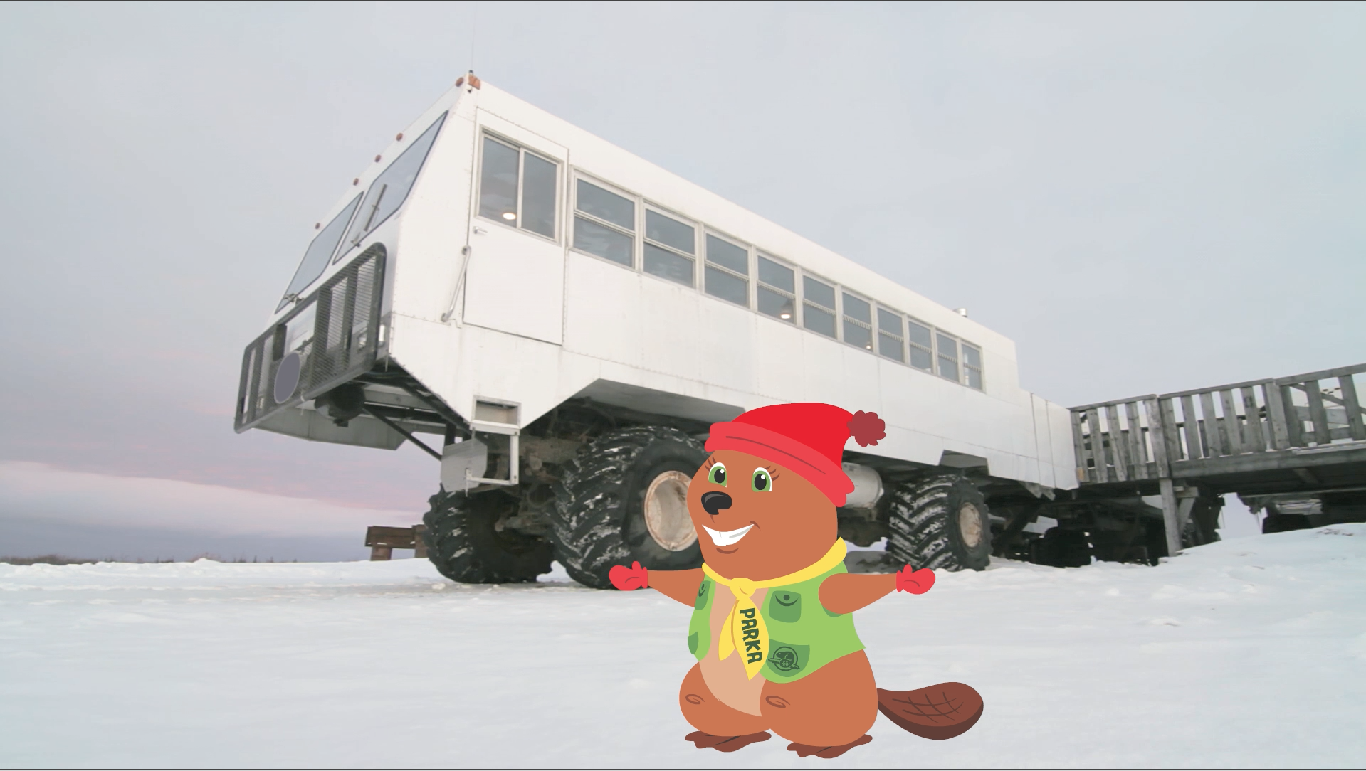 Parka visits the tundra to see Polar Bears and discovers why they need to use a big truck to get there.