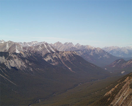 Photograph showing a uniform forest composed of mature trees in the Spray Valley in Banff National Park