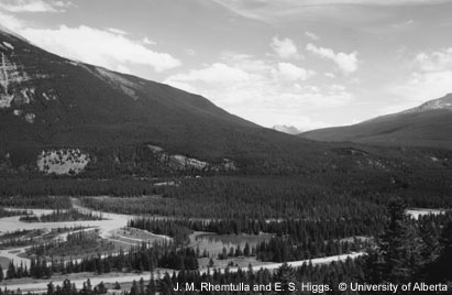 Two photos of the same area along the Athabasca River near the Palisades in Jasper National Park. One photo was taken in 1915, and the other was taken in 2000. The 2000 photo has significantly more mature pine trees