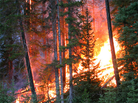 Fires burns in the forests of Kootenay National Park's Vermilion River area during the fires of 2003.