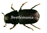 Beetlemania Button