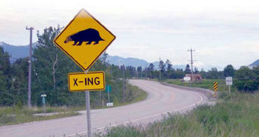 Badger-crossing sign by the road