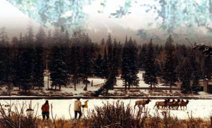Men herding elk in the snow