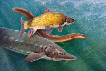 Painting of three fish