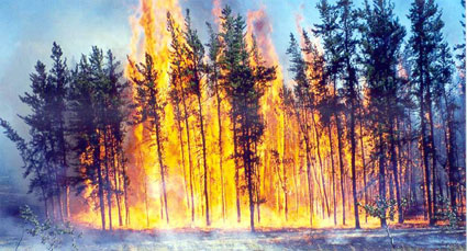 Raging forest fire