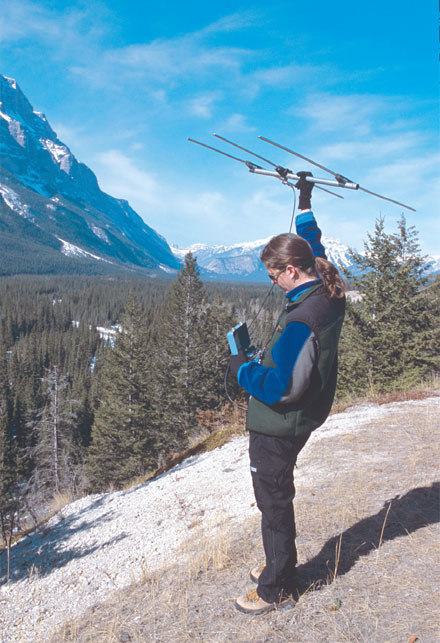 Biologist tracking wildlife at Banff National park of Canada