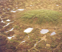 Tundra polygons surround a small pingo