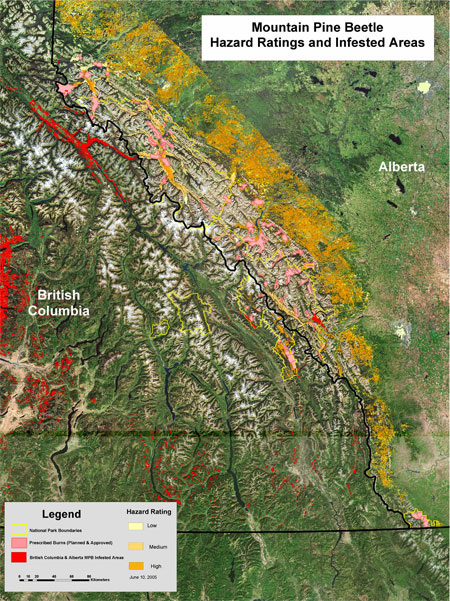 This map shows the mountain pine beetle outbreak in Alberta and British Columbia and demonstrates how forest industry and provincial and federal governments are working together to manage mountain pine beetle spread.