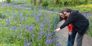 A couple looking at a field of Camas flowers in the Garry Oak Learning Meadow
