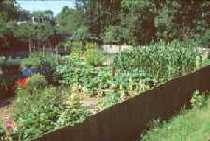 Four different views of the vegetable garden