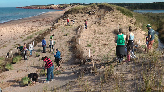 Protecting the sand dunes in PEI National Park is a priority for Parks Canada. Though dunes are vulnerable to human impact, they can be restored. Here is how it's done.