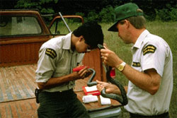 Two Parks Canada employees with an Eastern Ratsnake; the one on the right is putting a device on the snake's tail while the one of the left holds the snake.