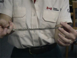 Close-up of a young Eastern Ratsnake being held by a Parks Canada employee.
