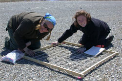 Two scientists using a frame on the ground to facilitate an inventory of Fernald's Braya plants. The land is almost completely bare and it basically looks like a field of gravel.