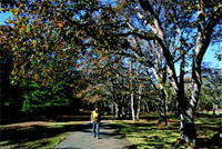 Garry oak trees at Fort Rodd Hill National Historic Site