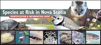 Species at Risk in Nova Scotia Identification and Information Guide