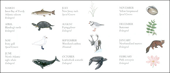 Featured species at risk in the calendar