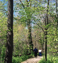 People walking along a trail through the deciduous forest in Point Pelee National Park