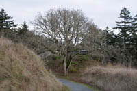 The open landscape of the Garry oak ecosystem