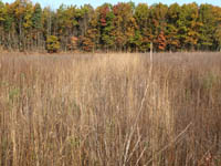 Restoration site planted with tall grass prairie species