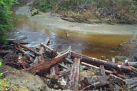 Stream bank stabilized with large woody debris