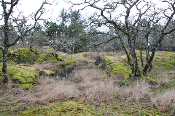 Garry Oak ecosystem at Fort Rodd Hill National Historic Site