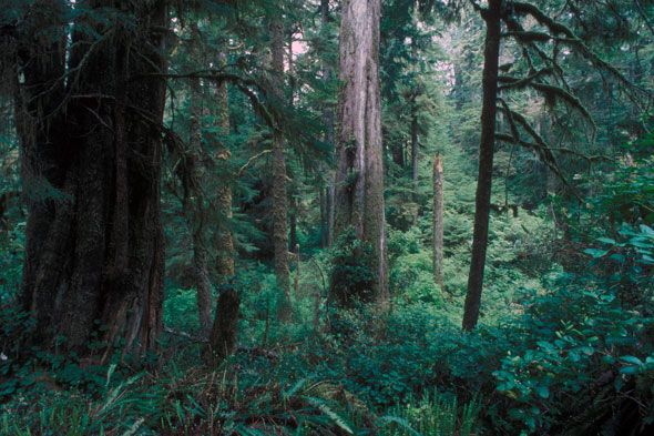 Rainforest near Long Beach, Pacific Rim National Park Reserve