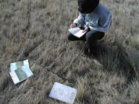 Sampling vegetation in a crested wheatgrass field
