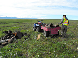 A worker is handpicking debris off-road and loading it onto an ATV at the site of the Main Landfill and Fuel Drum Cache South in Ivvavik National Park.
