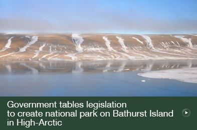 Government tables legislation to create national park on Bathurst Island in High-Arctic