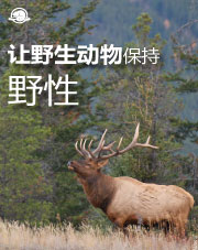 Traditional Chinese - Keep the Wild in Wildlife