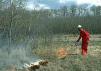 Warden using a drip torch to start fire in grass