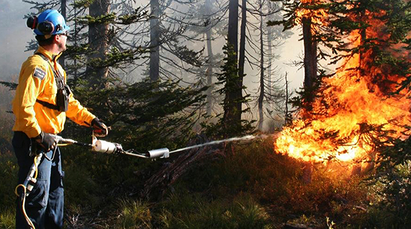 Parks Canada conducts a prescribed fire to create openings for whitebark pine