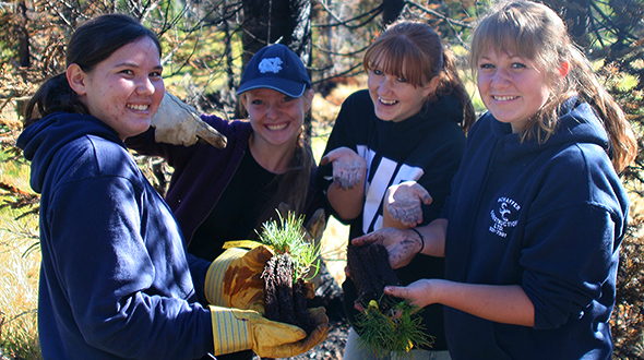 Volunteers help plant whitebark pine seedlings in Waterton