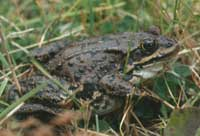 Close-up of a toad