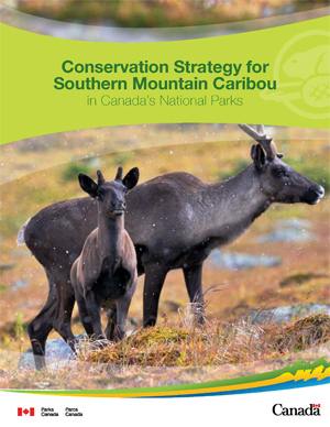 Conservation Strategy for Southern Mountain Caribou in Canada's National parks