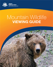 Mountain Wildlife Viewing Guide