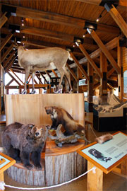 Interior of Rogers Pass Discovery Centre