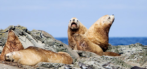 Sea Lions on the shoreline