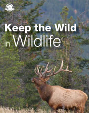 Keep the Wild in Wildlife
