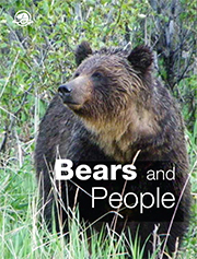 Bears and People