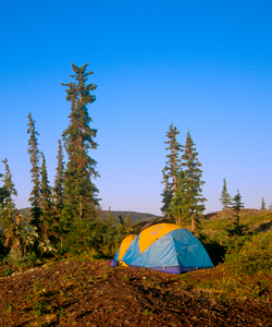 Colourful tent pitched for camping with trees and a clear, bright sky overhead
