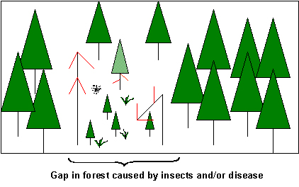 Graphic showing a gap in the forest caused by insects and/or disease