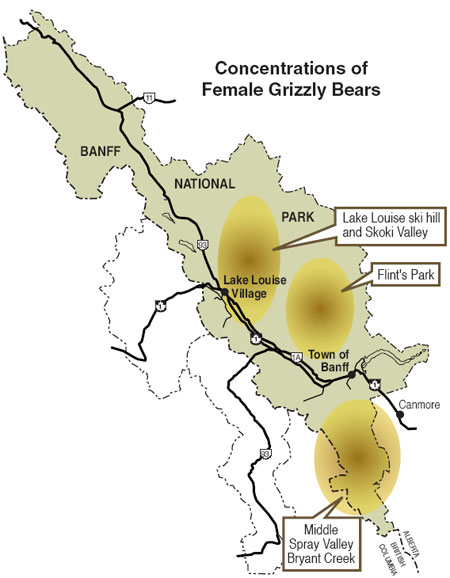 Concentrations of female grizzly bears in Banff National Park © Parks Canada