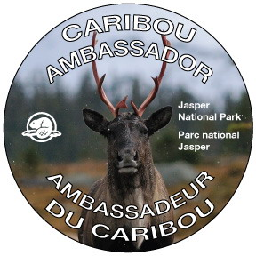 Caribou Ambassador button