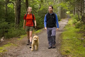 Two people walking their dog at Fundy National Park.